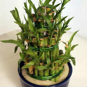 Бамбук NV415