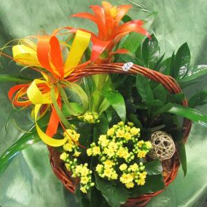 Кошници със саксийни цветя