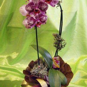 Саксийно цвете SK002