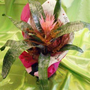 Саксийно цвете SK003