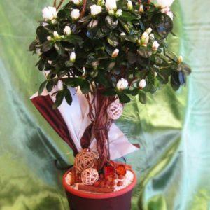 Саксийно цвете SK006