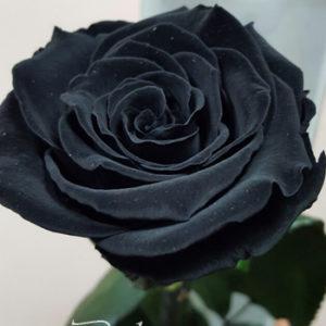 Черна роза в кутия NV624