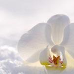 6 важни съвета при отглеждането на орхидеи
