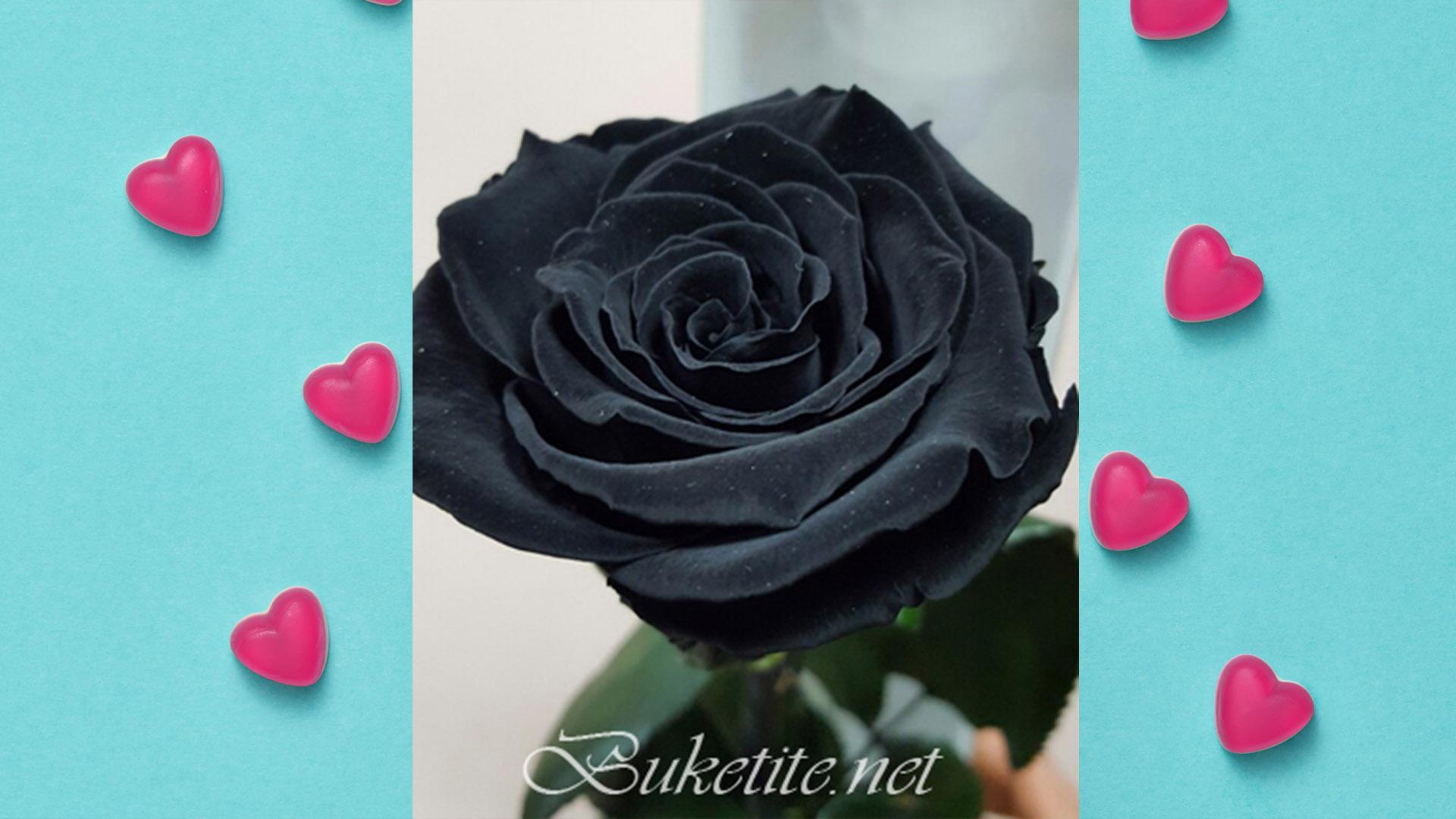 ИГРА! Спечелете черна роза за любим човек!