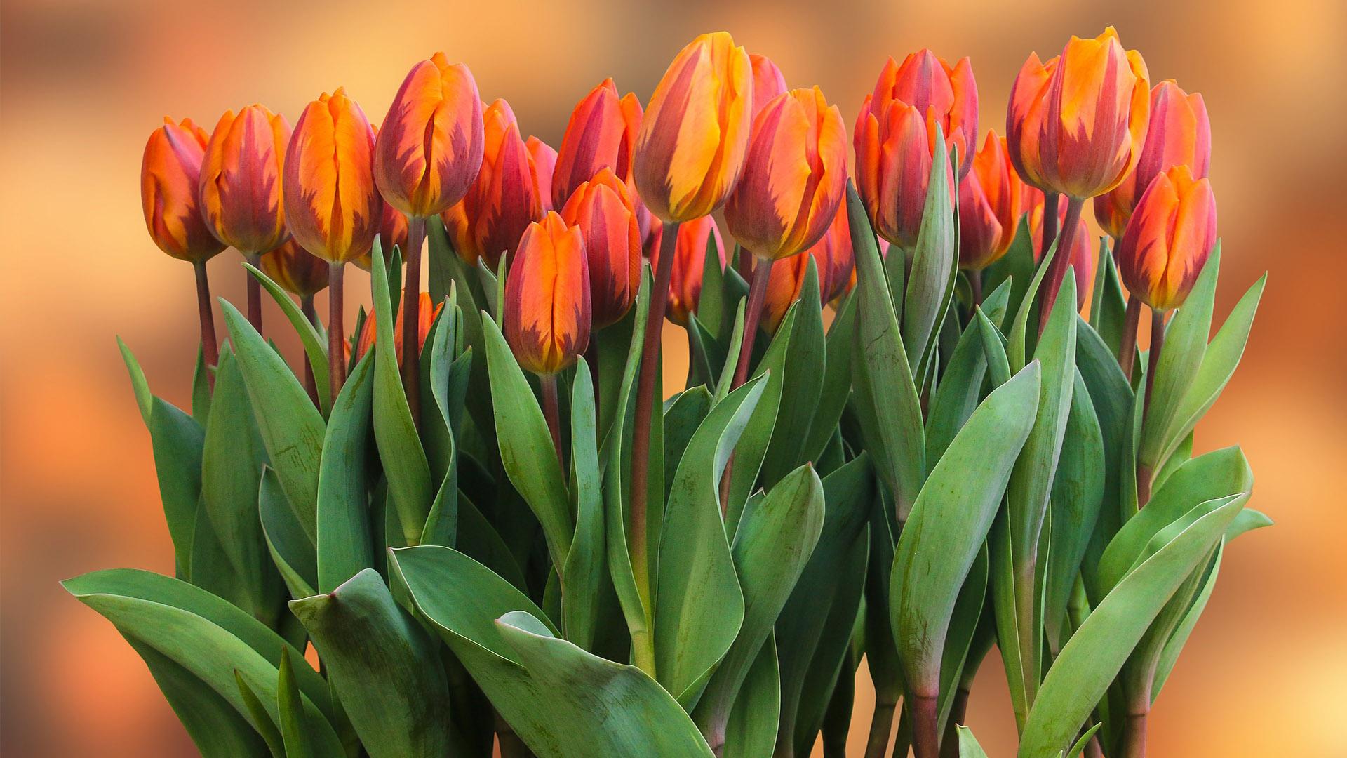 Любими пролетни цветя
